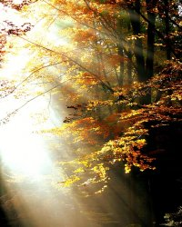 jesiennie promienie słońca o poranku